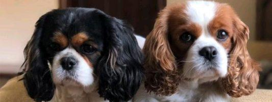 Grooming Paws | Dog Grooming Desborough Kettering