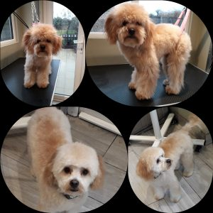 Dog Grooming Desborough